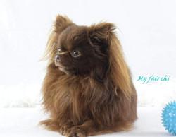 Mister Kiwi My fair chi