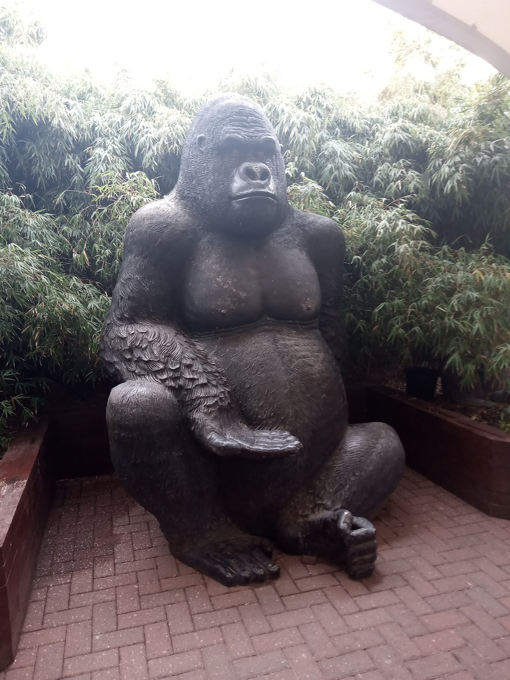 A large statue of a gorilla sits with his hand out amongst trees in a courtyard at Solway Holiday Village, Silloth