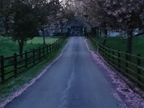 Graythwaite Estate, Cumbria - Travel Review