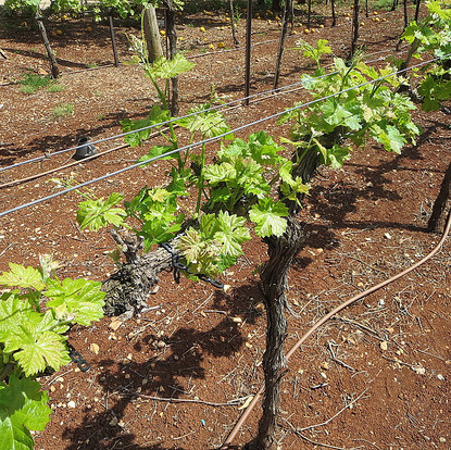 Springtime Wine Tours in Israel