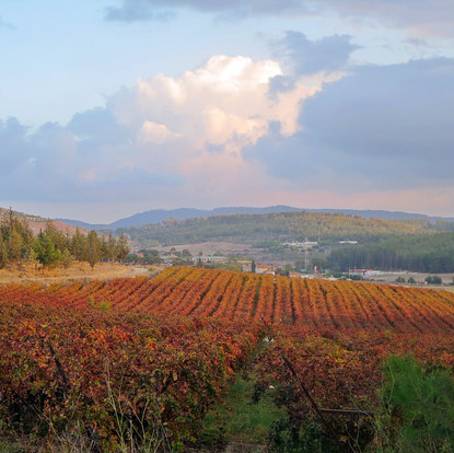 Wine Tours in Israel on a Rainy Day: Always a Good Time of Year for a Wine Tour in Israel