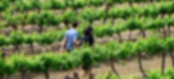 Israel Wine Tour Jerusalem