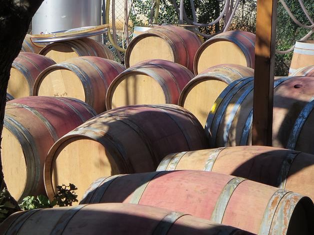 Wine Tours in Israel 1