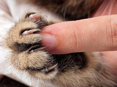 ¿Se cortan las uñas de los gatos?