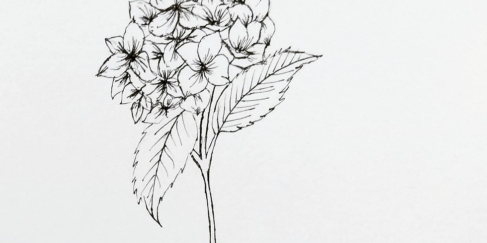 黑白之間・針筆植物插畫工作坊 Floral Illustrations Workshop