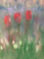 three red tulips_edited.jpg