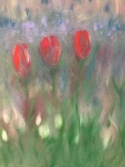 three red tulips_edited.jpg