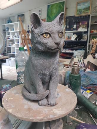 Louki chartreuse cat