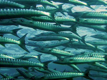 Reeling in China's 'Trash Fish' Problem