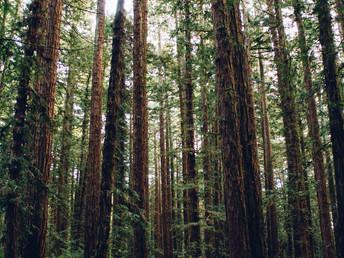 追踪九千英里的雨林木材供应链