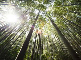 Bamboo: the Green and Great Grass