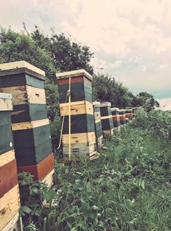 High Hives