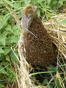 Post Swarm