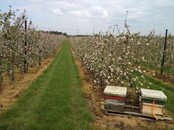 Kent Pollination