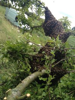 High Swarm