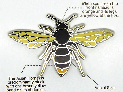 Asian Hornet Identification badge (Limited Edition)