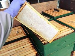 Good Honey Harvest