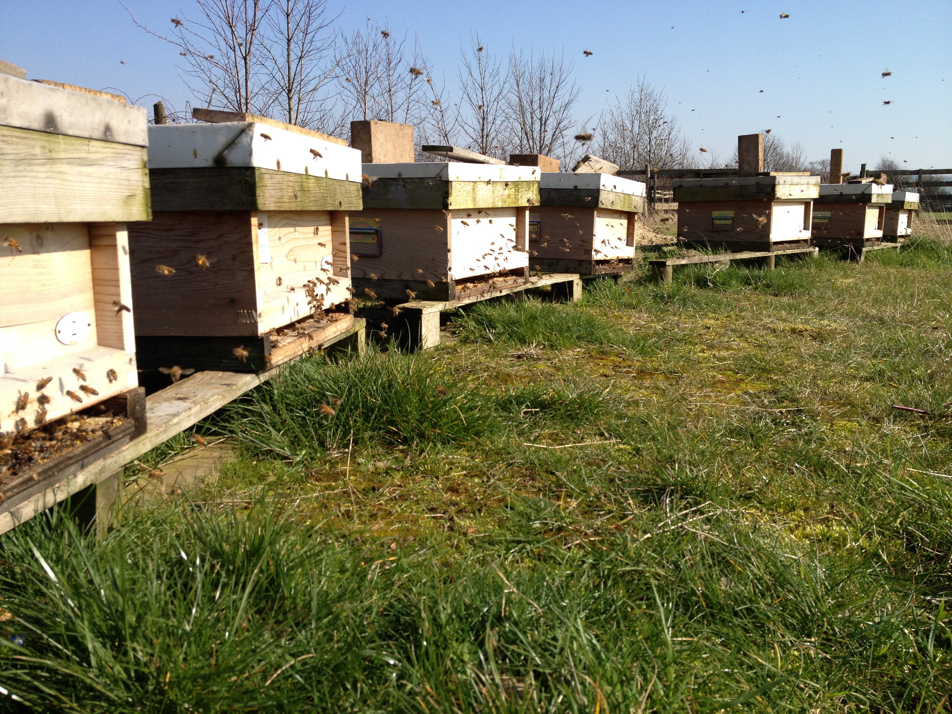 Oakwood Apiary (March 2015)