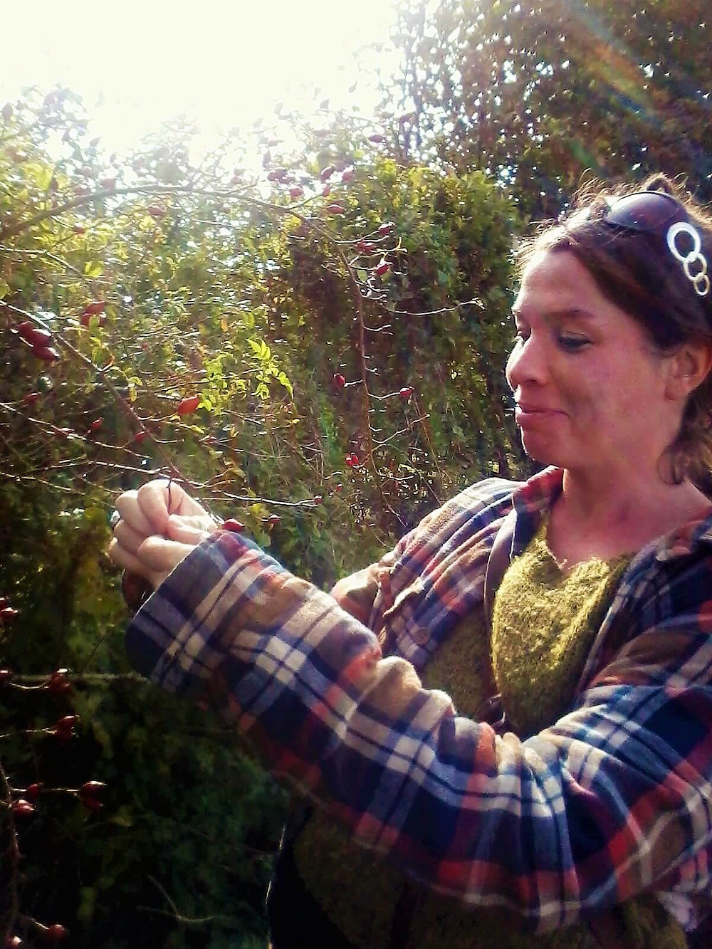 Foraging for wild rosehips