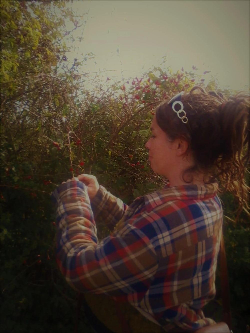 Me foraging for wild rosehips