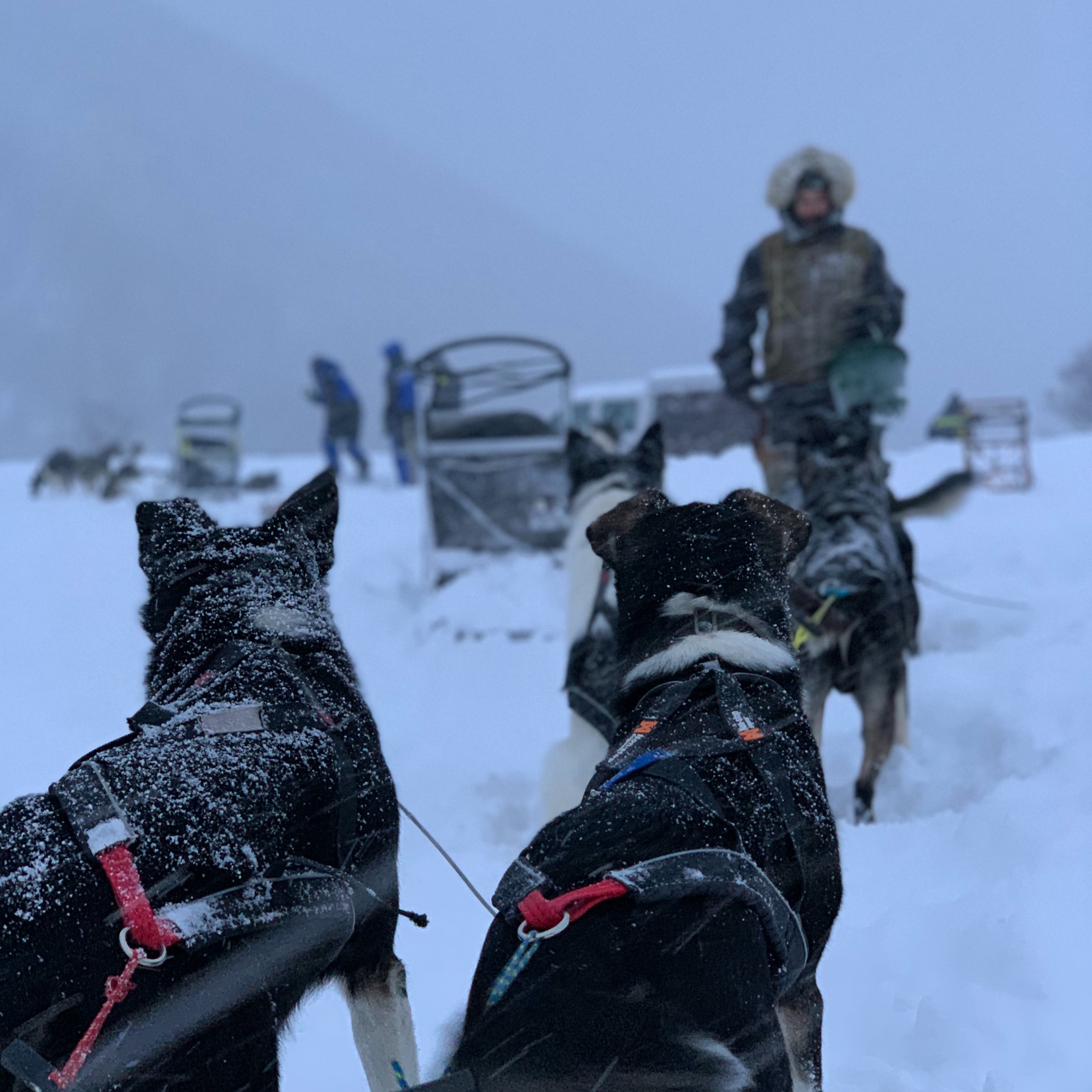 Two-day dogsledding trip