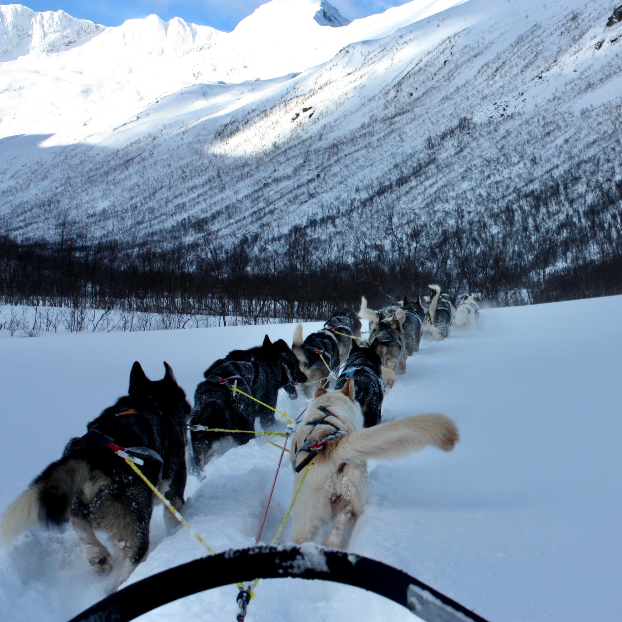 Dogsledding day-trip