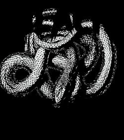 BlackViper_ModelLogo