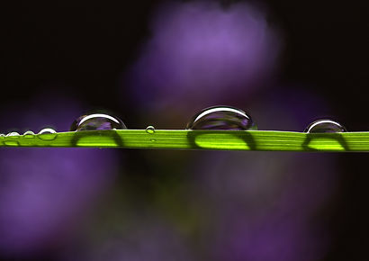 A blade of Grass by Simon Mee.jpg