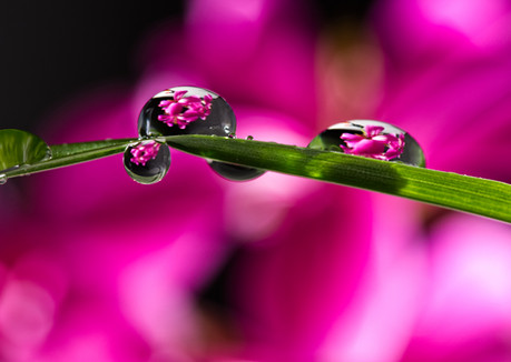 Flowers in a Raindrop