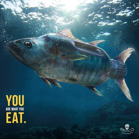 Week end Sentinelle pour les bénévoles de Sea Shepherd