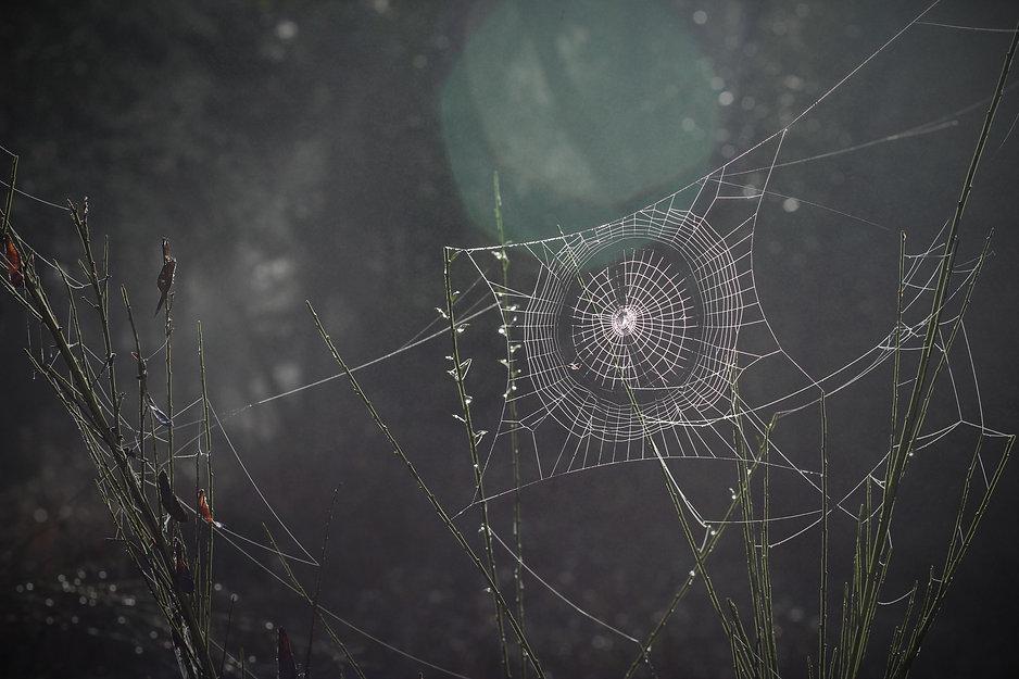 spider-web-1285293.jpg