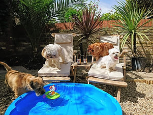 doggy daycare peckham