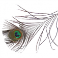Peacock-Feather-PNG-Image-180x180.png