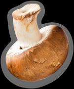 mushroom2-left.png
