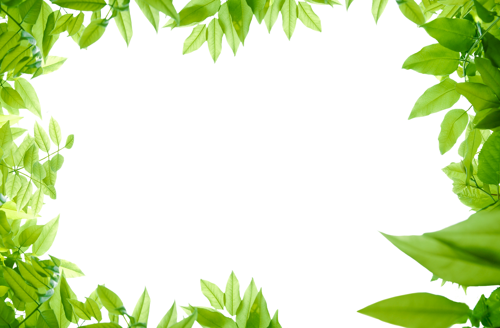 png-jungle-leaf-green-leaves-png-photos-