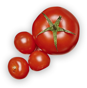 tomate-groupe.png