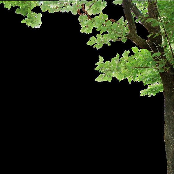 tree-border-png-7.png