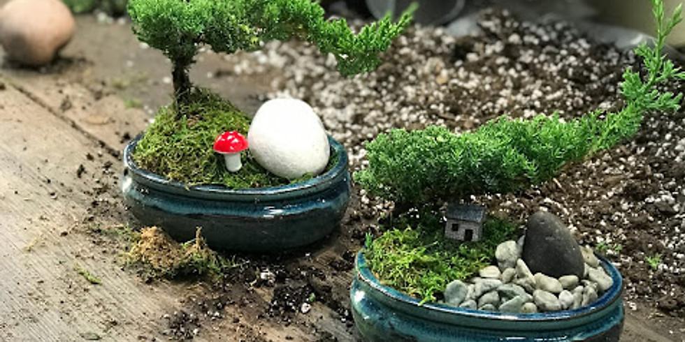 New Year Bonsai 101 (new year new hobby)