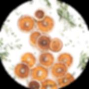 fruitssechés_copie.png