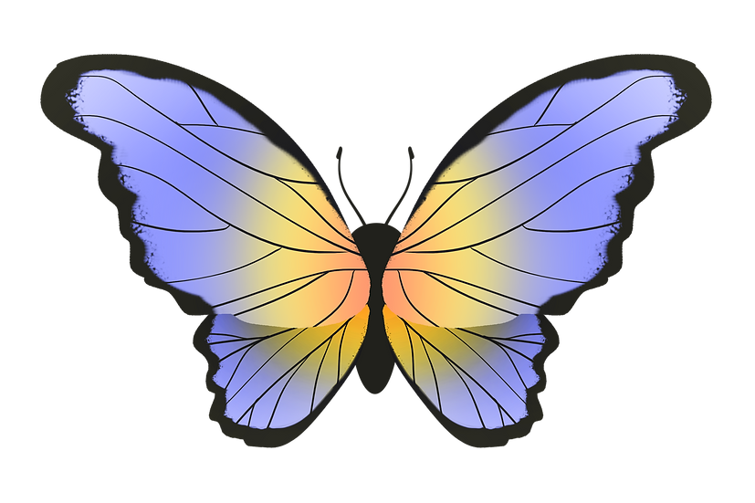 Gradient Butterfly Art - Free PNG Images, Transparent Image Digital Download
