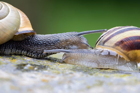 Why-Snails-Bubble-And-What-Does-It-Mean.jpg