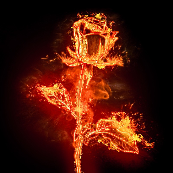 Charming Rose on Fire - Free PNG Images, Instant Download