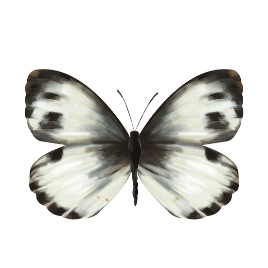White Butterfly Clipart - Free PNG Images, Transparent Image Instant Download