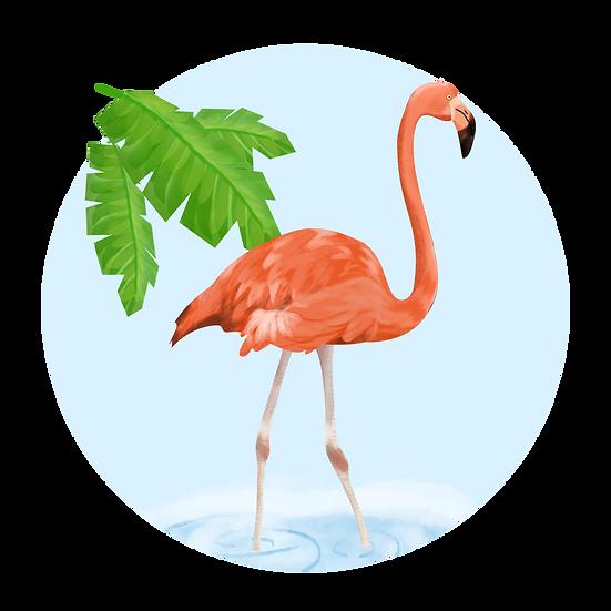 Pink Flamingo Free PNG Images - Free Digital Image Download