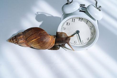 How-Long-Do-Snails-Live-2.jpg