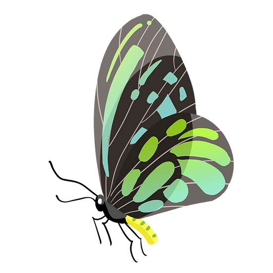 Gradient Butterfly Clipart - Free PNG Images, Transparent Image Digital Download