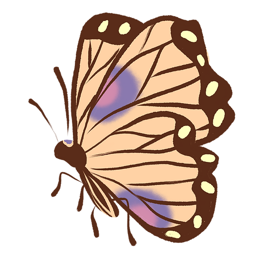 Pretty Colored Butterfly - Free PNG Images, Transparent Image Digital Download