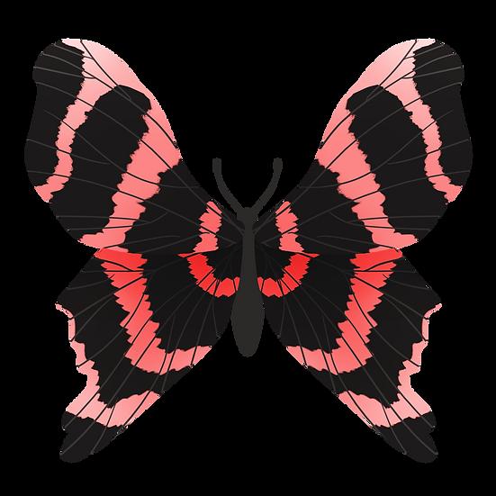 Black Pink Butterfly - Free PNG Images, Transparent Image Digital Download