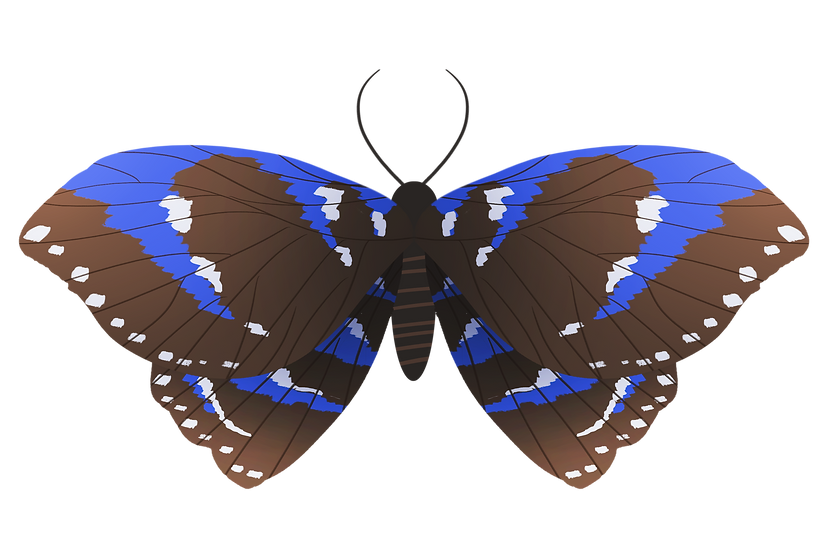 Black Butterfly Clipart - Free PNG Images, Transparent Image Digital Download