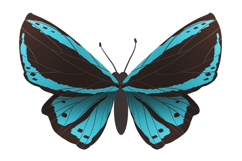 Blue and Black Butterfly - Free PNG Images, Transparent Image Digital Download